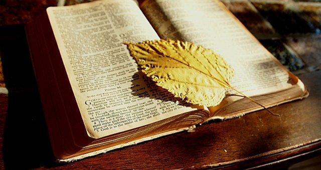 ÖĞRENCİ OKURLARIMIZDAN KİTAP İÇİN YAZILMIŞ SATIRLAR 4